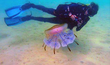 scuba diving angthong marine park from koh samui